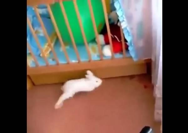 影音/小兔子被氣球嚇到 反應過度還是那~麽可愛!