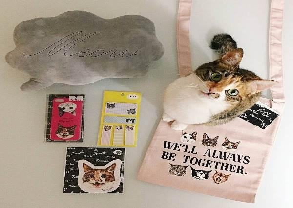 貓奴請小心荷包!日本百元雜貨超萌貓咪周邊,這個蝴蝶結帆布袋就直接包色吧!