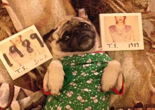 「哥」不能跳Shake It Off嗎?11張史上最可愛的泰勒絲惡搞版!