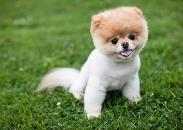 牠其實比你想的還聰明!你知道其實狗狗智商相當於2歲小孩嗎?牠甚至還看得懂中文?!
