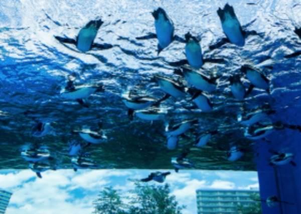 """一抬頭就是滿天企鵝?!日本第一座「高樓水族館」,超療癒""""飛天企鵝""""不是只有卡通才有!"""