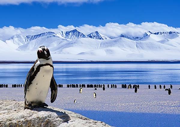 熱到吃不下飯?北極熊&企鵝超萌居家小物,一秒把你送到極地!