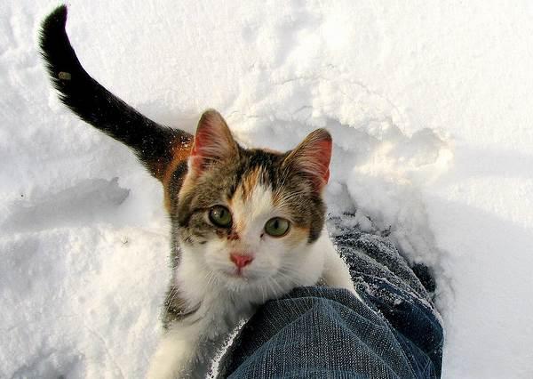 貓主子不給抱?是因為你抱抱方式錯誤!抱貓姿勢3學問,連最常見的「雙腳懸空抱」也會造成貓咪負擔?!