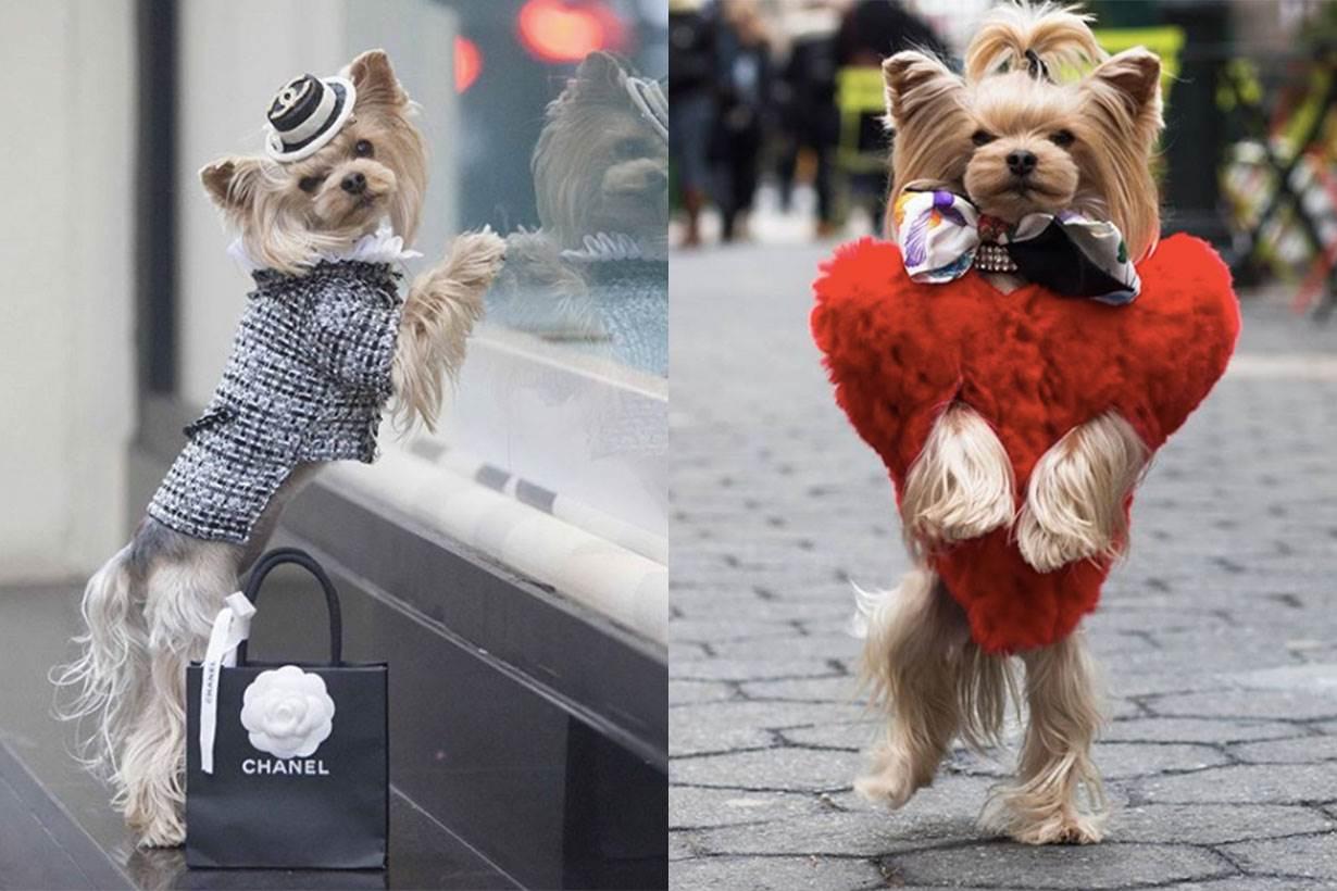 犬界也有貴婦!約瑟犬靠超時尚行頭爆紅成為INSTAGRAM 大紅人,竟然還跟蕾哈娜撞衫了!
