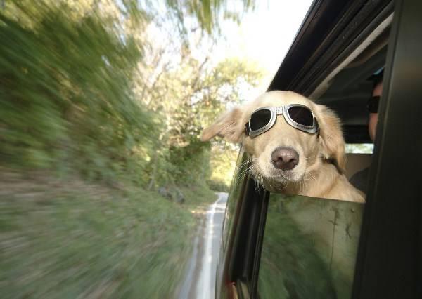 《帶著狗狗坐車兜風去》咦,怎麼一秒變成裂嘴女?