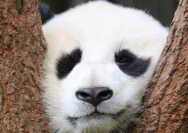 什麼?!「側睡」竟然會有黑眼圈!熊貓眼怎麼遮都遮不掉,放下遮瑕膏先改變睡姿吧!