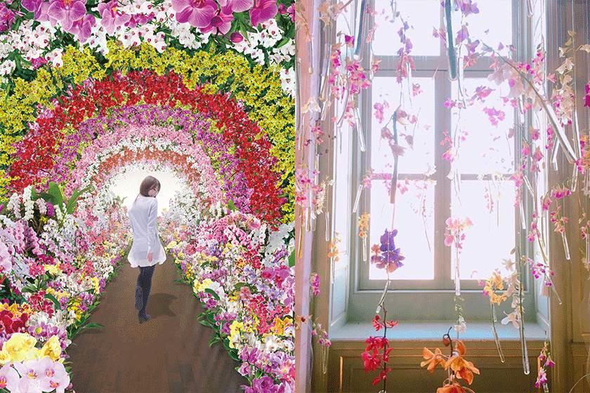 日本網美好幸福!長崎「大蝴蝶蘭展」引爆IG打卡熱,舖滿蝴蝶蘭的花之隧道也太夢幻!