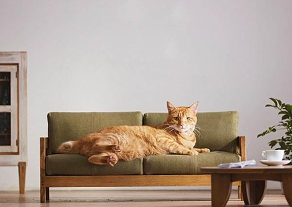 貓星人滾床:喵~朕很滿意!日本推出寵物專屬1:1比例家具,全世界的貓奴要小心破產啊!