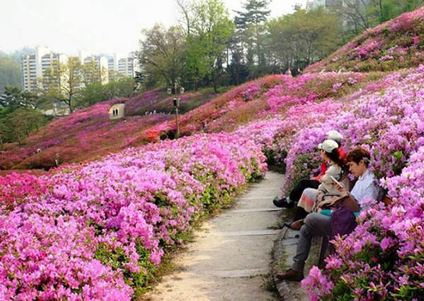 誰說春天只能賞櫻花?韓國這2個「四月專屬」的慶典才更誘人呢!快和閨蜜一起去殺光底片吧!