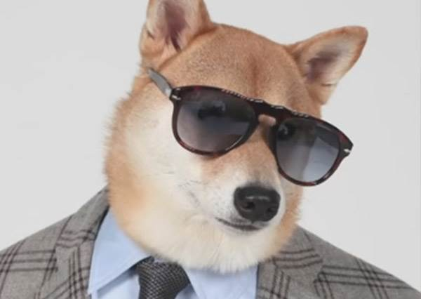風靡全球史上最講究穿搭的狗狗在這裡!牠是連男模都自嘆不如的超級狗模~