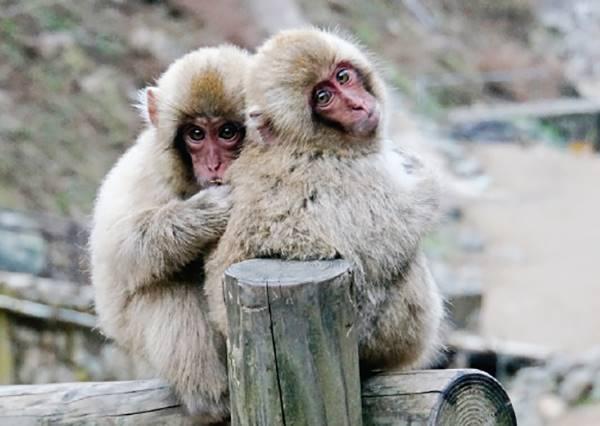 想看野生猴子泡湯奇景、平價吃高級和牛,你絕對要造訪日本此處!
