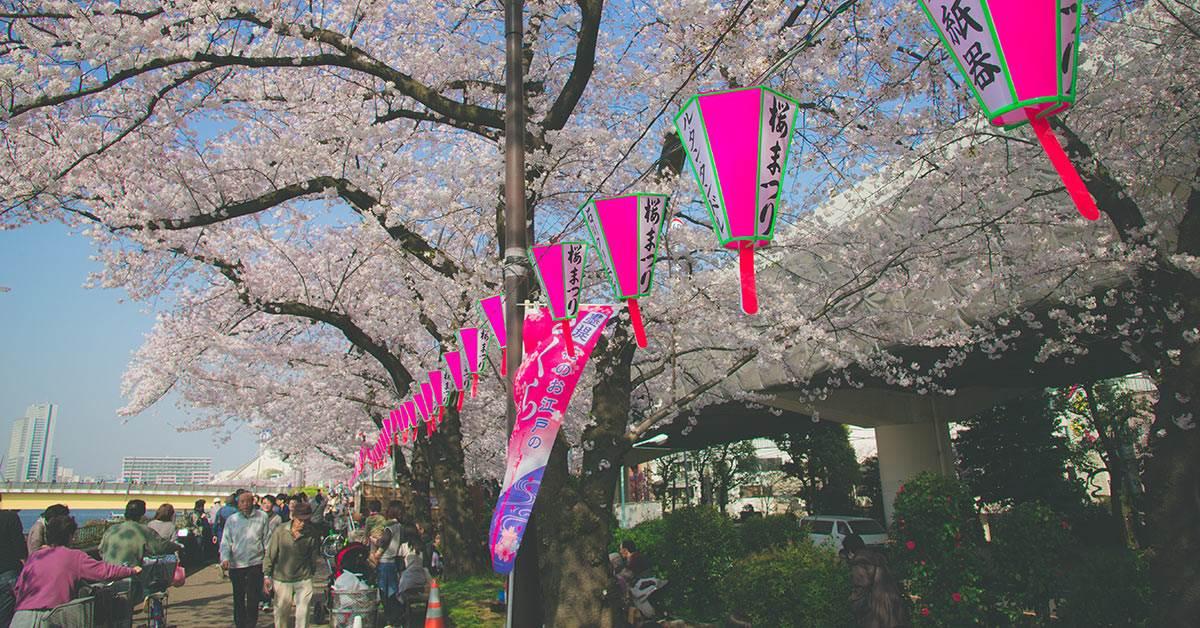 追櫻花也要追對地方!《東京4大賞櫻景點》還能順便野餐,坐在樹下淋著櫻花雨心裡只有幸福啊