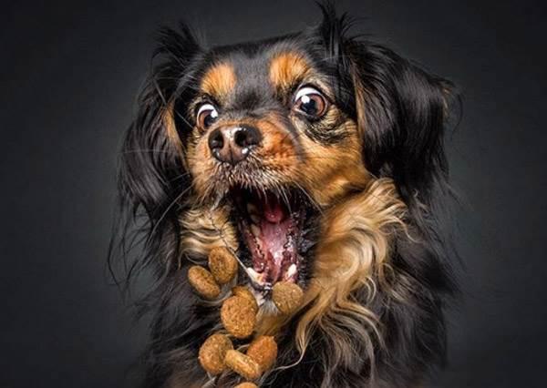 家有吃貨毛孩實在太療癒啦!超壞心主人捕捉狗兒口水噴發7個呆萌瞬間,美食當前狗狗也瘋狂啊~