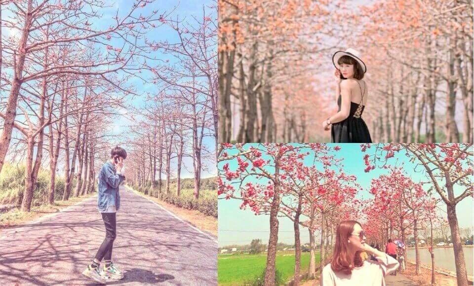 我不在家,就在賞花的路上!《全台4大木棉花景點》連老外都認證的「世界最美花道」就在台南!