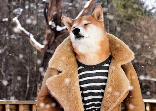 整個冬季都是我的韓劇頻道!入戲太深「超有梗歐霸柴犬時裝秀」,雪地忘情上演冬季戀歌根本「裴勇柴」啊~