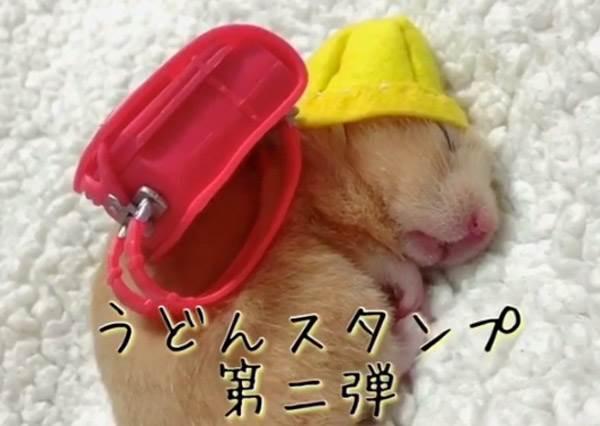 當學生多累你懂嗎?連睡覺都超有戲的「黃金鼠爆笑COSPLAY秀」,辣妹比基尼裝的萌樣好療癒啊!