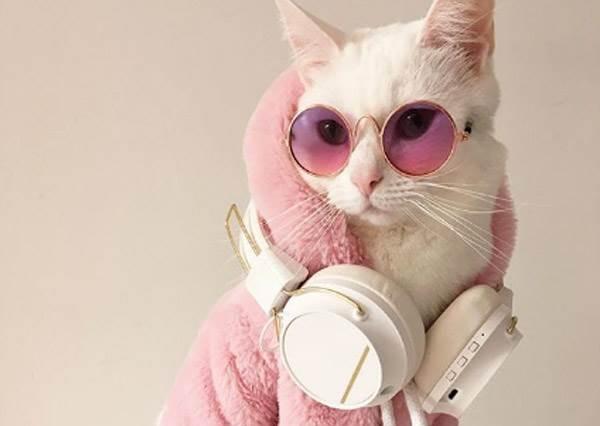 這態度連呸姐都服了U!高冷系萌寵喵「走跳時尚圈的日常穿搭」,墨鏡背後的超殺眼神誰敢不交出罐罐啊~