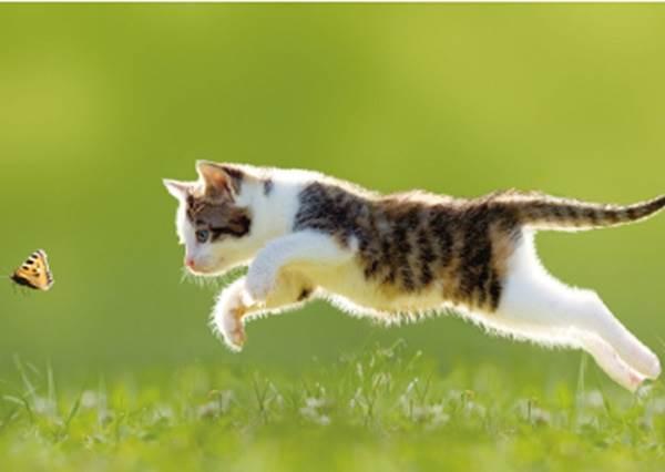 貓奴必讀的「喵星人行為全解析」:突然踏鍵盤不是想吸引你注意,對你喵喵叫其實也不是在撒嬌啊~