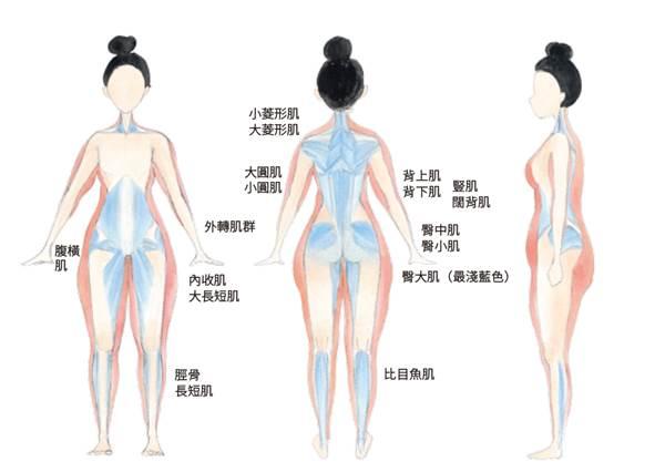 連睡覺都會瘦!跟Kimiko一起多鍛鍊「深層肌」養成明星體線,還能順便養成「吃不胖體質」!