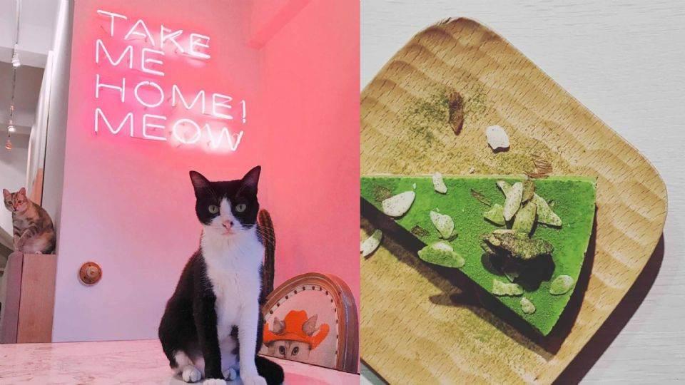 被主子包圍超幸福!《全台8間貓咪咖啡廳》貓奴必朝聖,保證從進門第一秒融化到最後一秒啊