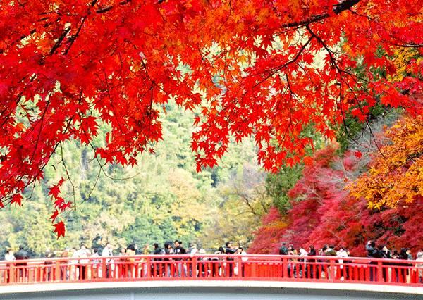 日本最有特色的5大賞楓景點出列!