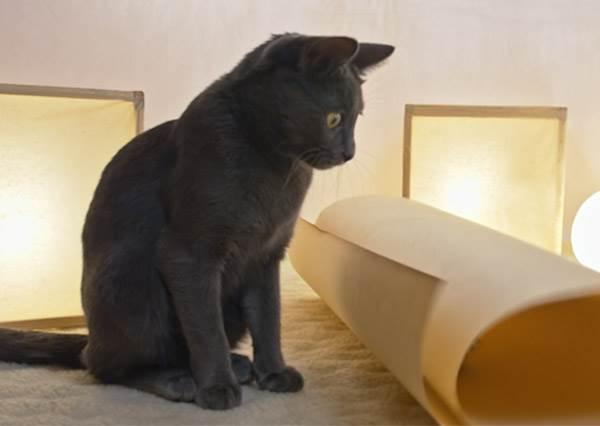 傳說中貓咪都是水做的? 超軟Q喵星人一秒表演縮骨功