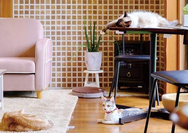 愛貓人的天堂!「貓咪咖啡廳結合住宿」的療癒之旅,就算只有一個人入住也不孤單寂寞冷!