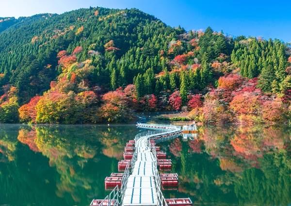 秋天94要賞楓阿,不然要幹嘛?《10個東京絕美楓葉景點推薦》,連銀杏祭都能打包進手機記憶體