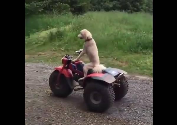 影音/丟下主人自己騎車的狗狗