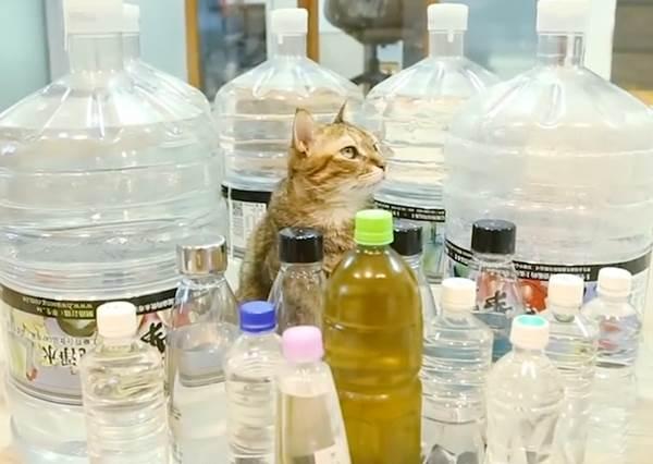 實測!網路傳言貓貓封印術 寶特瓶陣型讓貓貓們美丁美當
