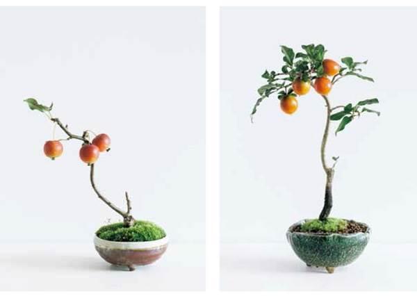 蘋果也可以直接在桌上種起來?會結果實的四季「迷你盆栽」5選,療癒心情順便填飽肚子?