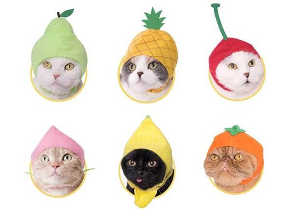 到底要把主子變成什麼?!日本推出「超ㄎ一ㄤ貓咪頭套」惡搞無極限,這顆鳳梨未免太厭世啦~