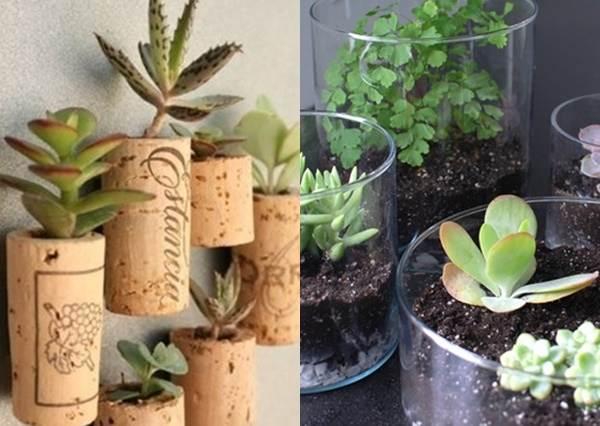 園藝神手94我!6大「照料撇步」讓盆栽長得又萌又健康,看一眼就療癒身心根本餵可愛長大吧!