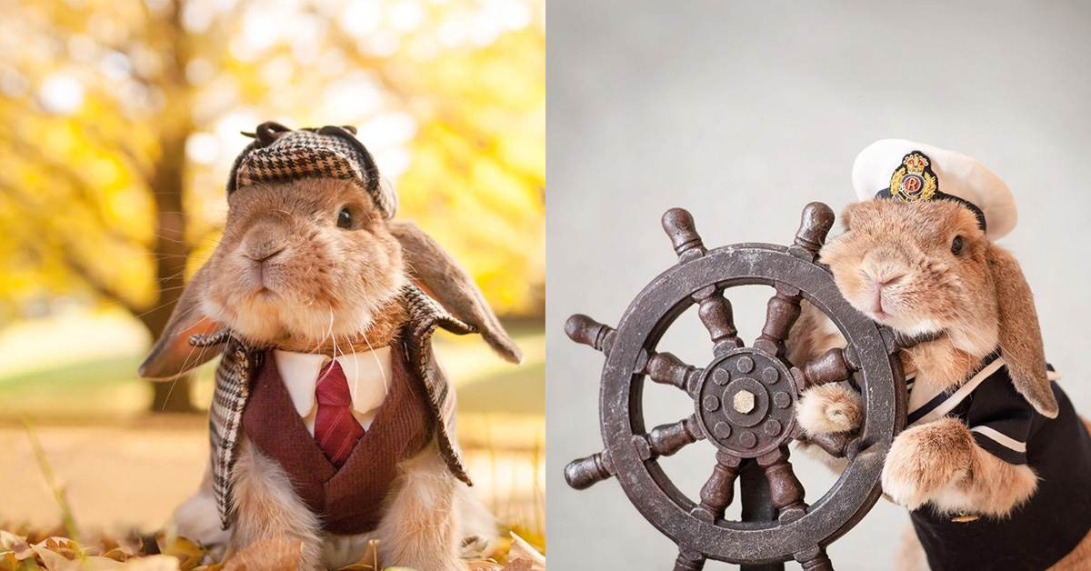 真實版彼得兔無誤!管你貓奴還狗奴,看完這隻「日本IG網紅兔」絕對一秒變兔奴啊~
