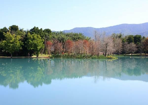 快門隨便按都是一張畫報!《全台11個落羽松夢幻秘境》:湖水鏡面那個居然不用人擠人?!