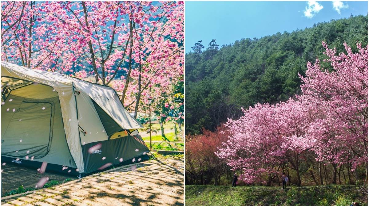 連日本櫻花協會都認證!《全台4大賞櫻景點》秒筆記,漫步在200株櫻花樹林裡何止浪漫啊~