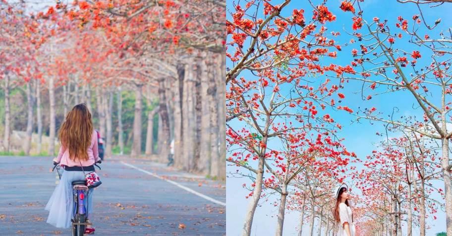 看完櫻花看什麼?《全台木棉花步道TOP5》,全亞洲「最美花道」就在台灣能不朝聖嗎!