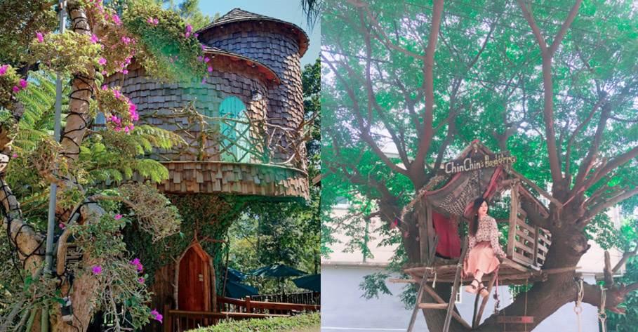 小時候一定都有夢想過!《全台7間樹屋》可愛到超欠住,還不快打包男友來去樹上住一晚!