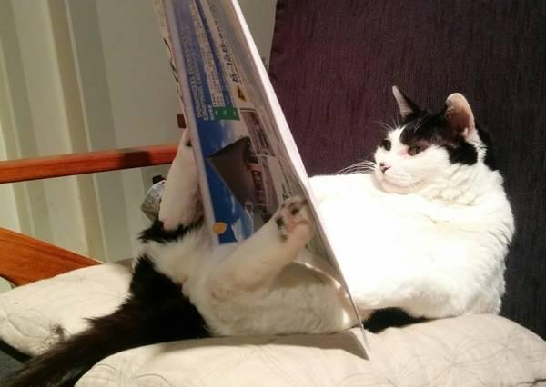 貓咪高智商技能GET√ 你家的也有這麼聰明嗎?