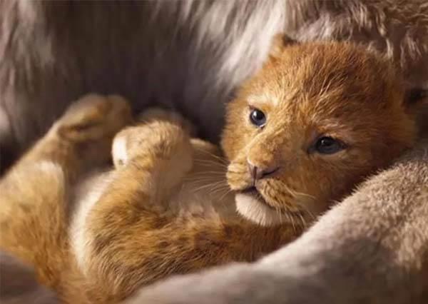 《獅子王》中真實版「辛巴」本尊曝光。超萌模樣令影迷表示:根本一模一樣!