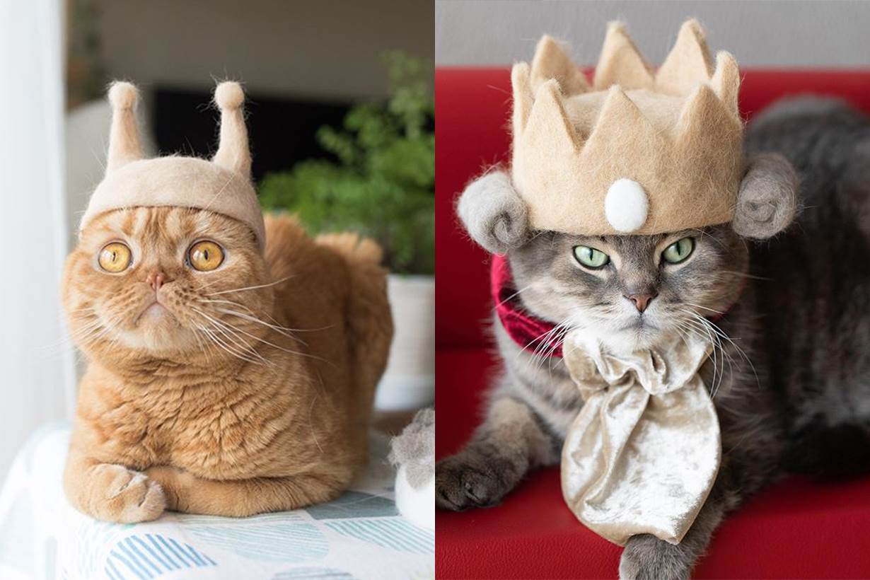 日本夫婦用貓主子的毛製作「貓毛帽子」,是要用可愛侵略地球了吧?