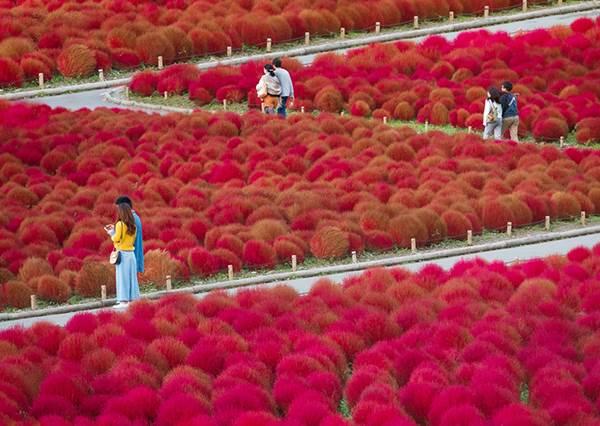 穿和服、參拜神社只是基本?日本必做「10大旅遊體驗」,通通打勾才不算白去啦~