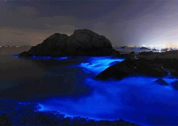 不可思議的超奇美景!海地下藍藍的神秘冷光,竟然是㊙㊙發出的?!