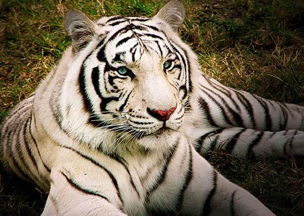 【測驗】你的性格最像哪一種異國動物呢?