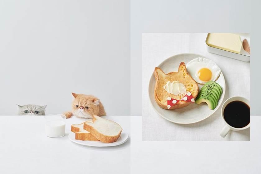#POPSPOTS in Japan:貓咪吐司專門店 Neko Neko Shokupan,屬於鏟屎