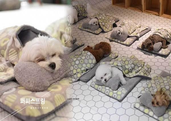 史上最威毛孩訓練中心!風靡韓國的「寵物學校午覺時間」,一系列睡搞搞照片實在是太Q啦!