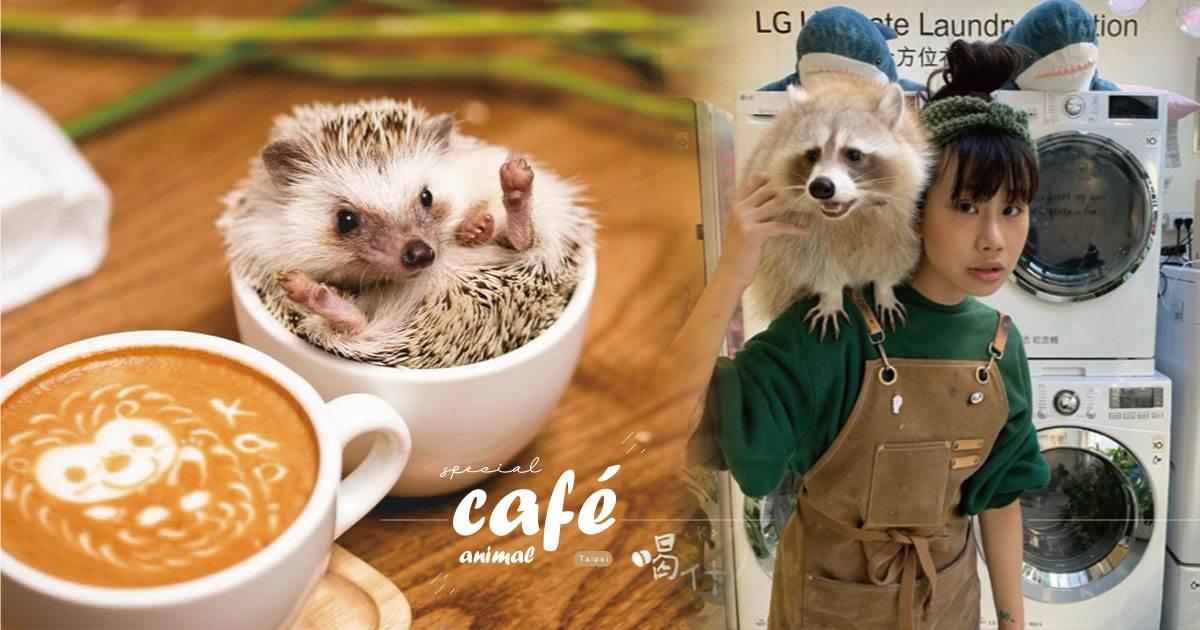 台北「獵奇動物」咖啡廳推薦!「浣熊、小狐朦、刺蝟」咖啡廳,陪你度過放鬆午後~