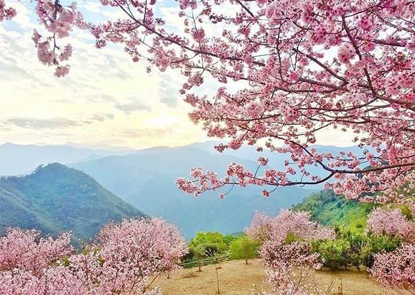 2020年櫻花季免出國!特搜全台賞櫻景點TOP 9,拉拉山除了水蜜桃還能拍美照啊~