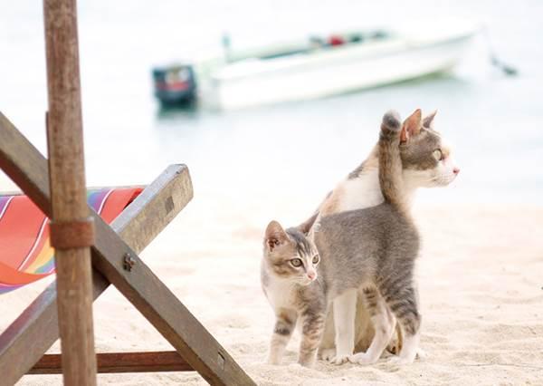 貓:還不快來拍一張?簡單學用這4招拍出超有質感的散景照!