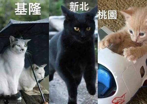 嘉義貓94要吃火雞肉飯!台灣人一定懂的「各縣市貓咪厭世真心話」,台中貓刺青刺全身是在派幾點?